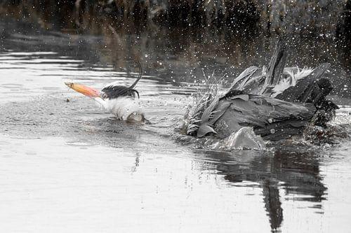 Eerste zwemles? van Amsterdam Fotografie (Peter Bartelings)