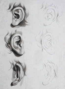 Studie und Skizze von Ohren auf einem Gesicht in schwarz-weiß von Henk Vrieselaar