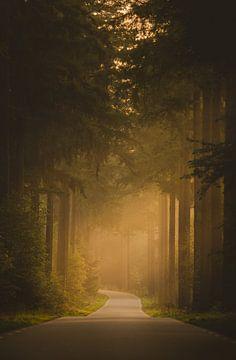 Morgenlicht im Speulderbos von Ivor Baak