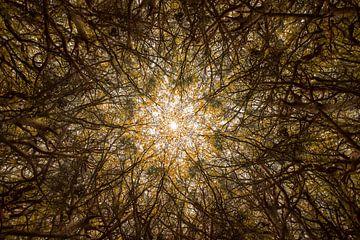 Natürliches Mandala der Bäume von Andius Teijgeler