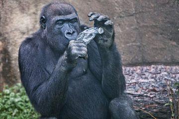 Der Gorilla-Affe weiß nicht, wie er den Plastikmüll in Form einer Sodaflasche entsorgen soll