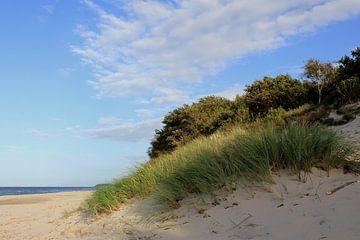Dünenlandschaft an der Ostsee van