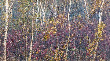 Bäume im Herbst von Thijs Friederich