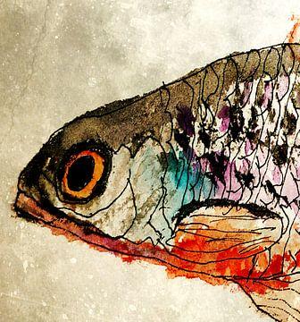 Fisch von Kay Weber
