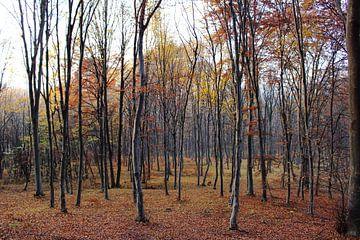 Statig herfst bos van
