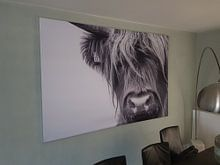 Kundenfoto: Portrait Scottish Highlander Schwarzweiss von Sandra van Kampen, auf medium_13