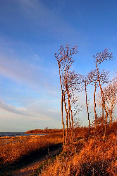 In der Winterabendsonne van Ostsee Bilder