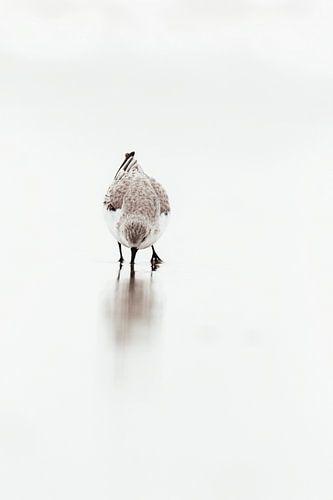 Drieteenstrandloper in de branding | Scheveningen kust - Natuurfotografie Nederland | Fine Art