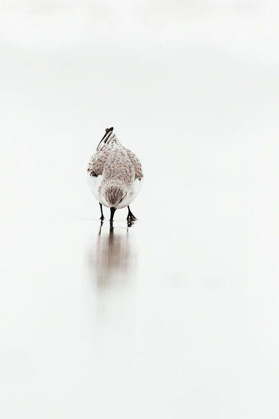 Bécasseau sanderling dans le surf | Côte néerlandaise - Photographie de nature Pays-Bas | Fine Art sur Dylan gaat naar buiten