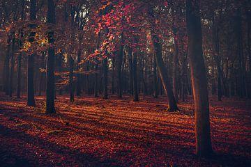 Der rote Märchenwald von Joris Pannemans - Loris Photography