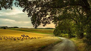 Stro balen Zuid Limburg in de avond zon van piet douma