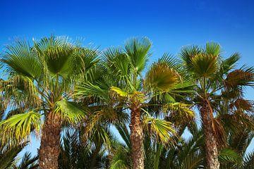 Palmen von BVpix