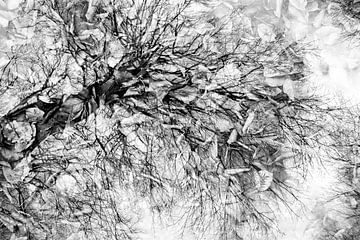 BaumKunst von Loulou Beavers