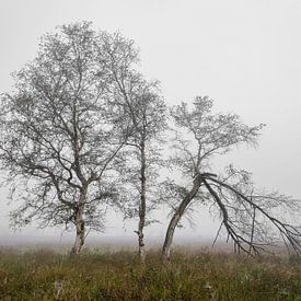 Berkebomen in de mist van Peter Bolman
