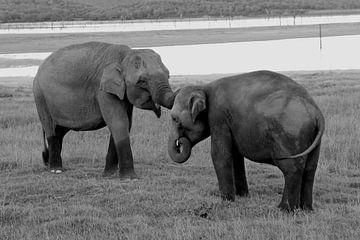 Asiatische Elefanten von Inge Hogenbijl