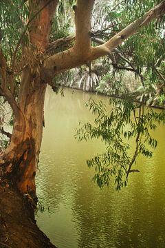Arbre au-dessus de l'eau du Jourdain. Eau lente, branches tombantes, symbole du baptême sur Michael Semenov