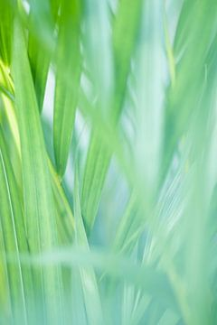 Groen van Mêgan Nauta