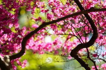 Japanese garden 3 von Raoul Suermondt