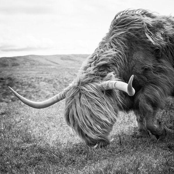 Schotse Hooglander van Eriks Photoshop by Erik Heuver