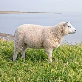 Lammetje op Texel. van Justin Sinner Pictures ( Fotograaf op Texel)