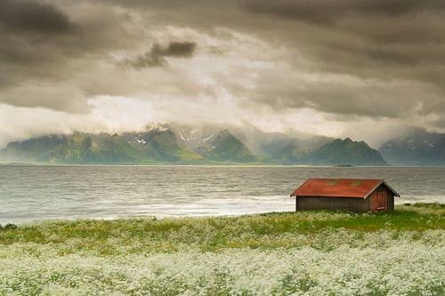 Mooie lichtval Vesteralen Noorwegen van