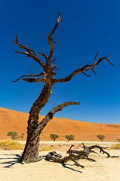 Sossusvlei Namibië (9) van Adelheid Smitt