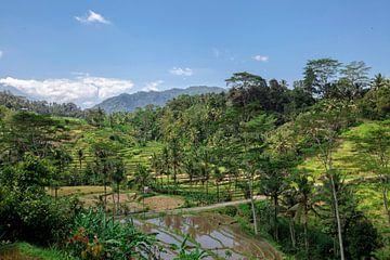 Erstaunliche Reisterrassen und einige Palmen um uns herum, Ubud, Bali, Indonesien von Tjeerd Kruse