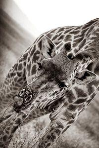 Giraffe auf der Serengetti in Tansania, Afrika