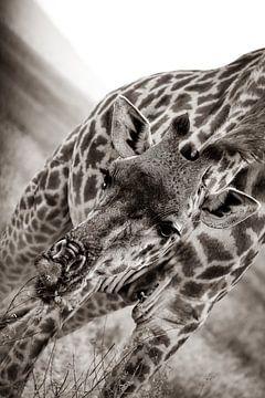 Giraffe op de Serengetti in Tanzania, Afrika van Willemijn1712
