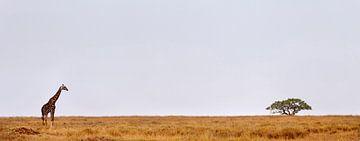 Giraffe Serengeti von Paul Jespers