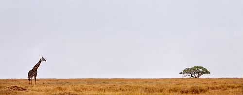 Giraffe Serengeti sur Paul Jespers