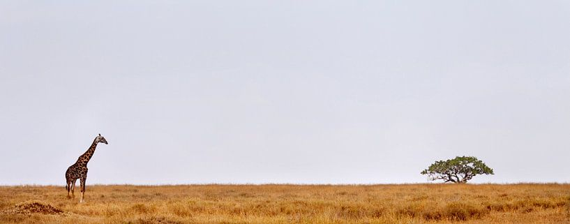 Giraffe Serengeti van Paul Jespers