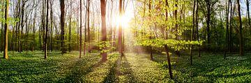 Wald im Frühling bei Sonnenaufgang von Günter Albers