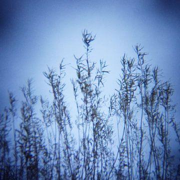 twiggy 06 van poetic snapshots