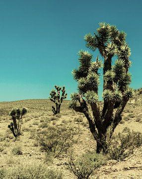 Joshua Tree van Vanmeurs fotografie