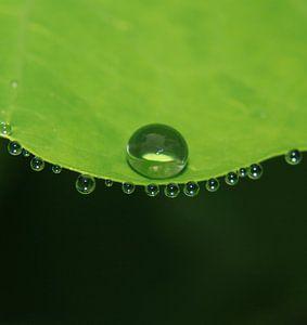 Das Grün und die Wasserperle
