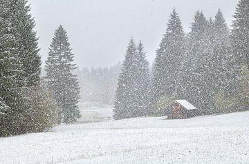 Snowstorm von Olha Rohulya