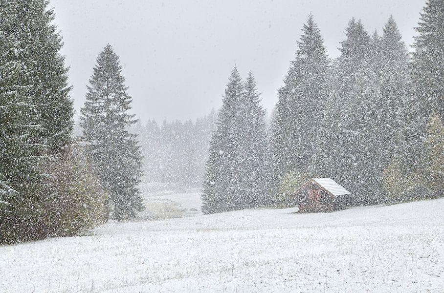 Snowstorm van Olha Rohulya