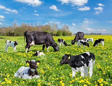 Koeien en pasgeboren kalfjes in hollandse weide met bloeiende paardenbloemen van Ben Schonewille