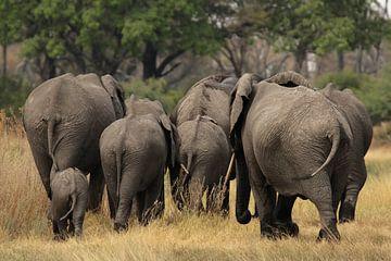 Olifanten in de Okavango Delta van Dirk Rüter