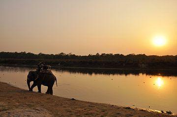 Elefant bei Sonnenuntergang am See. von Michael Semenov