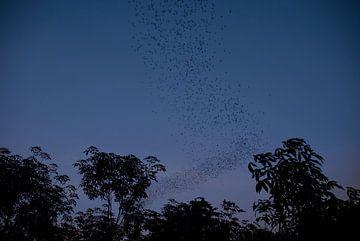 Vleermuizen bij nacht van MM Imageworks