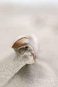 Scheermes in het Zand van