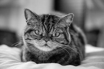 Katze in Schwatz und Weiss von Mojca Osojnik