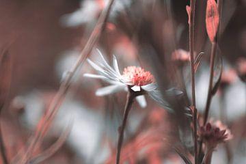 Blüte 003 von Carmen Varo