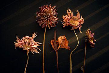 Stilleven van gedroogde bloemen van Karel Ham