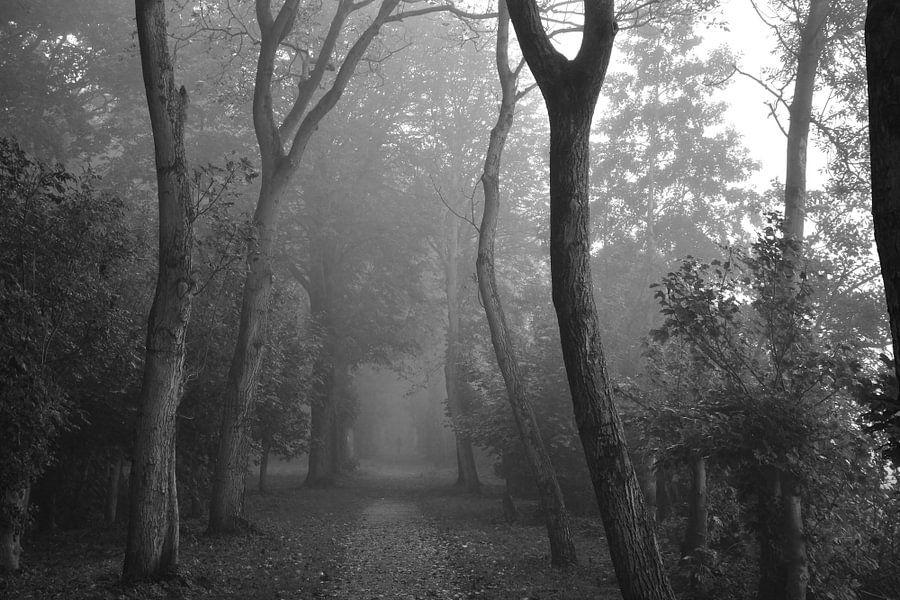 Bomen op een mistige ochtend van Maurice Kruk