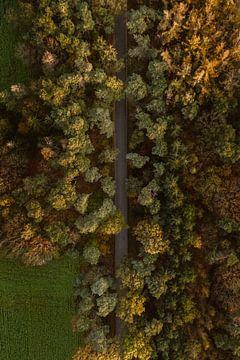 Drohnenbild einer Straße im Herbst von Wianda Bongen