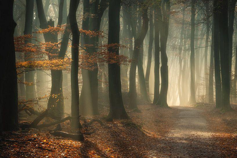 Door de bomen het bos niet meer zien van Maaike van Tol