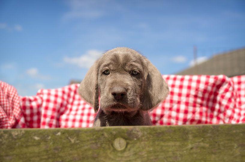 Pup in de kist van Mogi Hondenfotografie